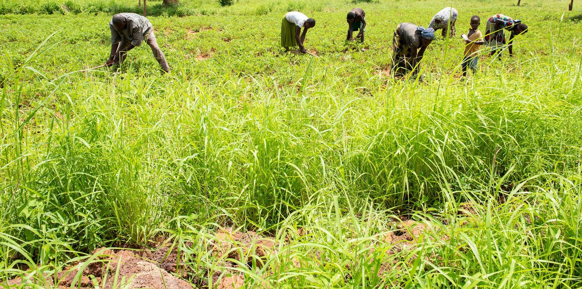 Bauern nutzen die Hilfe zur Selbsthilfe mit viel Einsatz.